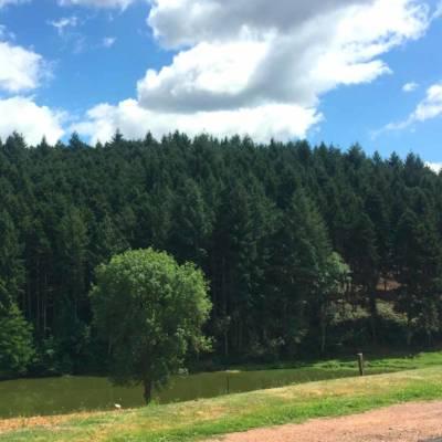 bois sur pied - paysage