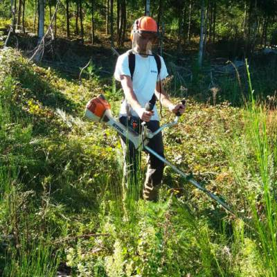 travaux forestiers - entretien
