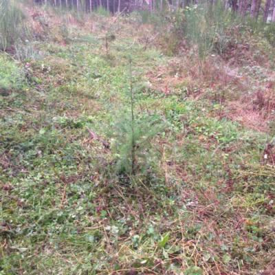travaux forestiers - reboisement