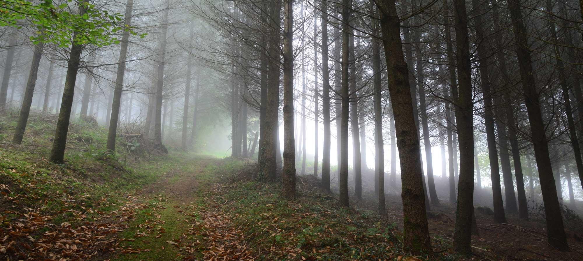 Propriétaire forestier